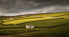 Storm Brewing (Glenn D Reay) Tags: teesdale landscape sheep lambs shelter storm light pentaxart pentax k30 sigma1770hsm glennreay