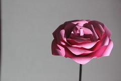 Flor de papel (Andy Romej) Tags: flor nature naturaleza origami flower