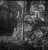 leaf compost bin V, wire fence, yard, West Asheville, NC, Flektar TLR, Arista.Edu 400, Ilford Ilfosol 3 developer, late April 2017 (steve aimone) Tags: leaves compost compostbin wirefence trees yard westasheville northcarolina flektar flektar75mmf35 tlr twinlensreflex aristaedu400 ilfordilfosol3developer 120 film 120film mediumformat monochrome monochromatic blackandwhite 6x6