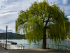 Weeping Willow (Th.Duerr) Tags: trauerweide weepingwillow baum tree ufer flus river