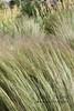 Long Grass (Jenny Titford Photography) Tags: grass windblown