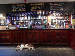 Bar Blocking. (deltrems) Tags: pumpandtruncheon pump truncheon blackpool lancashire fylde coast pub bar inn tavern hotel hostelry house restaurant pet dog bailey welsh border collie