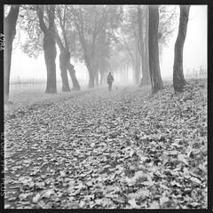 walking in the fog (Italian Film Photography) Tags: fog nebbia people walking leaves autumn foglie autunno strada road film pellicola square traditional tlrautocord blackandwhite biancoenero analogica analogue ilford fp4
