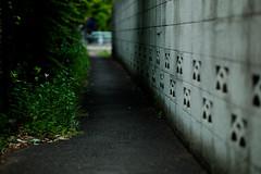 path (N.sino) Tags: m9 summicron90mm path weed wall ブロック塀 雑草 細道 小路
