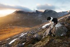 Hill walks are the best kind of walk. (svensl) Tags: bert border collie dog torridon scotland schottland highlands scottish winter eighe