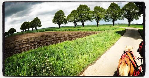 Pony drive #ostfrieslandleben