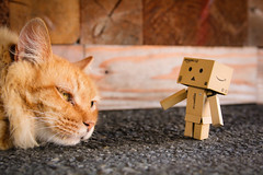 youroukeikoku / Canon EOS60D:SIGMA 17-50mm F2.8 EX DC OS HSM (telenity) Tags: japan danboard mini amazon canon cat cute