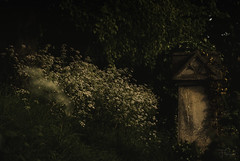 Light of night... (Coisroux) Tags: headstone decay overgrown forgotton brompton cemetery london ivy entangled summersecrets stonework historical headstones memorials d5500 nikond darkness shadows sunglow night trees ominous serene atmosphere