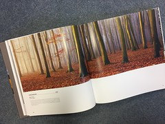 Landscape Photographer of the Year 10 Years Special Edition (craig.denford) Tags: landscape photographer year 10 years special edition classic view runner up 2012 charlie waite craig denford beech trees surrey