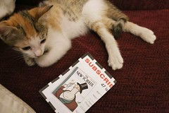 It Has to be Said that Momo Doesn't Like New Yorker's Cat Cartoons (Mayank Austen Soofi) Tags: delhi walla it has be said that momo doesn't like new yorker's cat cartoons