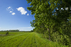 At Baker Wetlands (pdecell) Tags: bakerwetlands lawrence kansas spring green