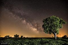 Enfrentados (A.Coleto) Tags: via lactea árbol noche night estrellas linterna fria led lenser canon