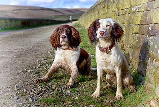 Mollie & Rupert