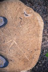 (MarcoAgustoniPhotography) Tags: trentino val sella italia bosco natura alberi taglio tronco piedi scarpe