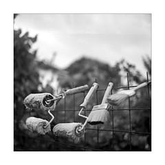 setole ;/) (schyter) Tags: салют salyut type ii 1965 6x6 medium format medio formato arsenal kiev pellicola film analogica analogic soviet camera ukranian 11500 b industar29 2880mm fsu macchina fotografica bw bn bianconero blackwithe basiasco lodigiano lodi mf ilford fp4 plus 125 adox adonal 137 spotmeter homemade development homemadescanned tank ap compact 26 °c argentica epson v600 allaperto monocromo bianco e nero analogicait