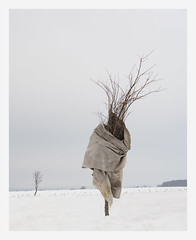 (Guy Ducharme) Tags: hiver winter neige snow arbre tree paysage landscape saintaugustindedesmaures