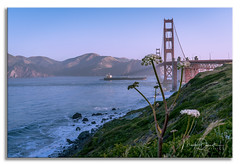 Golden Gate Hillside (Mark Darnell) Tags: california goldengate sanfrancisco bridge place structure