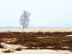 A lone tree (Tsogobauggi) Tags: tree suomi north alone ice nature lonely grass snow spring finland sea empty birch balticsea trees foggy bythesea misty may lone white quiet moment