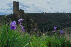 Château de Quertinheux à Lastours (Philippe_28) Tags: lastours ruines châteaux ruins 11 aude france europe tour cathare cabaret regine surdespine quertinheux