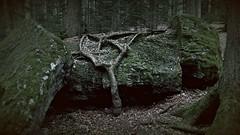 Clutch / Umklammerung (Caledoniafan (Astrid)) Tags: bavarianforest bayerischerwald bayern bavaria wald forest nature natur landscape landschaft felsen rocks caledoniafan samsunggalaxynote3 samsung note3