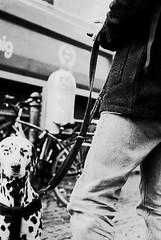 don´t blink (Anton C.) Tags: berlin berlineralltag analoguephotography adofix adox adoxadonal analogue artinbw analog bw blackwhite black blackandwhite blanconegro white film filmisnotdead filmmeanssomethingtous filmisawasteoftime germany dog ishootfilm kodak kodaktrix kreuzberg monochrome nikon nikonf100 nikkor50mm118d rodinal streetphotography streetlife semistand tx400 leash blink 135