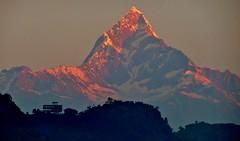 """NEPAL, Himalaya - Machapuchare, der Fischschwanz (6997 m ), früh morgens , von Pokhara aus gesehen, 16156/8455 (roba66) Tags: machapuchare machhapuchhare machhapuchchhre nepalimāchhāpuchchhrehimāl """"fischschwanz""""6997m himalayaroba66urlaubreisentravelexplorevoyageslandschaftlandscapepaisajenaturenaturnaturalezzabergbergemountainsmontanagebirgefelsenrockrocksgletschereisiceearlymorningfrühmorgensmorgenlicht reisen travel explore voyages roba66 visit urlaub nepal asien asia südasien pokhara natur nature naturalezza himalaya gebirge berg fishtail"""