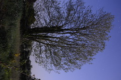 SPC_2262 (seansverige) Tags: moonlight naturallightphotography nocturnalphotography longexposure