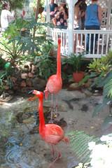 KWButterfly154 (alicia.garbelman) Tags: florida keys keywest keywestbutterflyandnatureconservatory birds flamingo