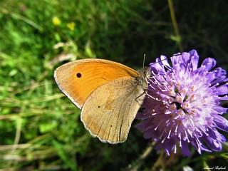 Butterfly 1305