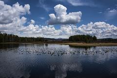 Clouds Reflected in Swan Lake (Patrick James Colorado) Tags: teton tetons grandtetonnationalpark gtnp rockymountains mountains mountain nature landscape scenery scenic lake water reflection swanlake clouds
