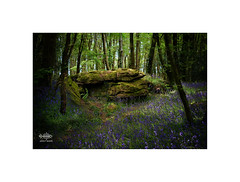 Soft Rock (silver/halide) Tags: granite woods forrest johnbaker bluebells blue moss outcrop