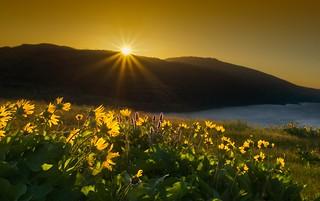 Sunrise at Rowena Crest E