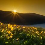 Sunrise at Rowena Crest E thumbnail
