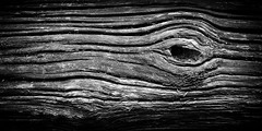 The Wooden Eye (mr_m_tom) Tags: eye bw nikon d810 whale reigate tree