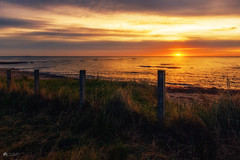 You can look... but don't touch... (Kerriemeister) Tags: beadnell northumberland coast coastal beach sand sea sunrise sky clouds colour warm light fence barbed wire grass dawn nikon posts fencedfriday fencefriday hff happyfencedfriday sigma