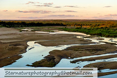 _DSC4963 copy (naturephotographywildlife) Tags: kruger wildlife scenery animals birdlife a99ii africa park