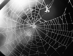 morning spider web (parrotlady66..) Tags: spider web morning morningsunrise canon70d blackandwhite