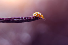 She's different than the others... (ElenAndreeva) Tags: beauty spring sun light summer bokeh natural cute colors 500px insect canon magic purple top soft dream composition tones fantasy sweet focus bug best amazing nature macro garden ledybug
