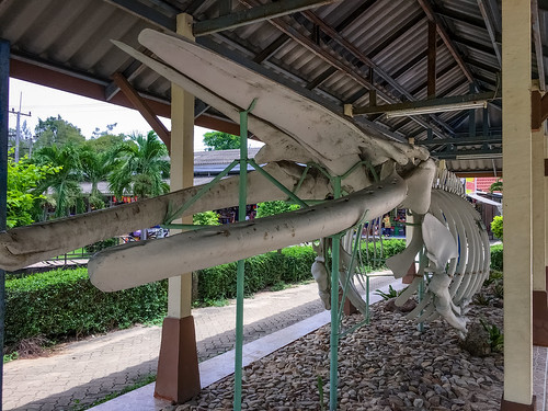 Blue Whale Skeleton, Hua Hin, Prachuap Khiri Khan
