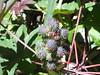 strana pianta (PhoToRCh) Tags: zen tenerife mare viaggiare masca losgigantes sea land island isola water love travel ferie pianta plant secco