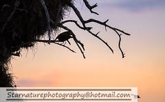 _DJA3611 copy (naturephotographywildlife) Tags: kruger wildlife scenery animals birdlife a99ii africa park