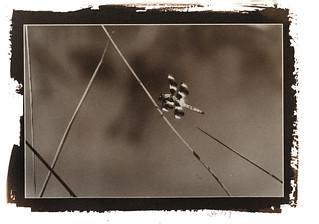 Dragonfly - Salt Print