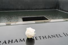20170424-DSC01057 (Lazy Sleepy Kitty) Tags: newyork unitedstates us 911memorial manhattan rose flower reflectingpool memorial wtc worldtradecenter memorialpool september11 museum