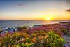 California Flowers (Kansas Poetry (Patrick)) Tags: california patricknancydocalifornia lagunabeach flowers color colour wedding patrickemerson
