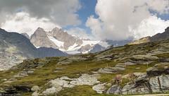 Alti pascoli (cesco.pb) Tags: valmalenco valtellina lombardia italia italy canon canoneos60d tamronsp1750mmf28xrdiiivcld montagna mountains