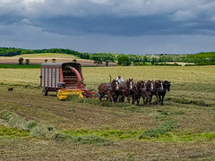 Impending weather (Images by MK) Tags: brodhead wisconsin unitedstates us wi summer farm field farmstead farming rural horses horse agriculture chopper hay haylage silage horsepower wagon chopperbox outdoors stormclouds stormy storm amish