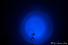 #sombras #shades #sombra #shadow #flor #flower #2016 #amor #love #luz #light #foco #focus #spotlight #azul #blue #luzazul #bluelight #focoazul #bluefocus #photography #photographer #picoftheday #sonystas #sonyimages #sonyalpha #sonyalpha350 #sonya350 #alp (Manuela Aguadero) Tags: blue azul shadow sonystas focus 2016 bluefocus luz sonya350 sonyimages foco light spotlight bluelight focoazul picoftheday amor flower photography shades sombras sombra sonyalpha sonyalpha350 flor luzazul love photographer alpha350