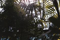 agfa-100-8 (Vasily Ledovsky) Tags: voigtlander bessat 35mm film canon 50mm 5018 ltm m39 f18 agfa color 100 expired 2007 moscow