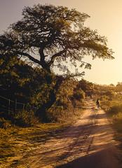 Atardecer sobre algarrobo (Bruno Aiub Robledo) Tags: bruno aiub robledo caballo horse sunset atardecer cordoba argentina nature naturaleza