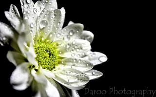 Flor blanca - White flower